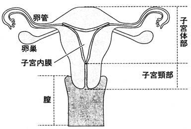 20091108子宮発育不全