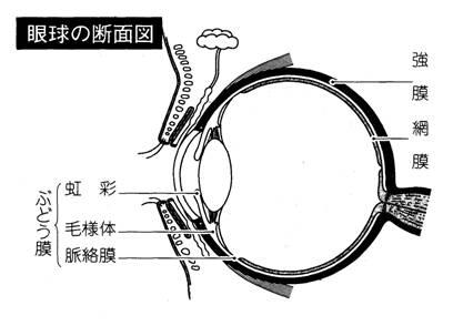 20120129ぶどう膜炎